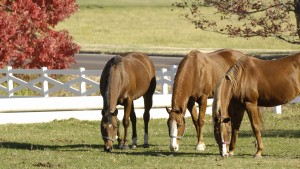 Horses grazing on the fields of the Stephens Equestrian Center